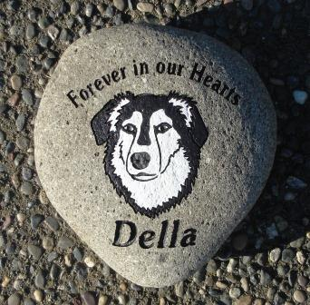 "Border collie ""Della"" forever in our hearts"
