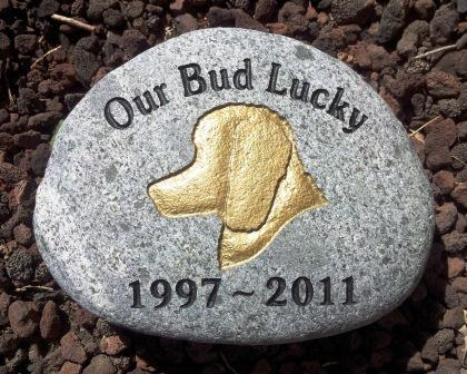 Remembering Lucky, the poodle
