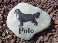 A garden stone for Polo Golden retriever