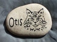 Otis the cat River rock
