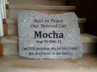 Our beloved cat - Mocha