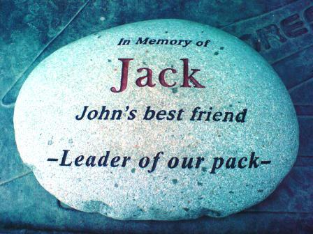Jack - the leader of our pack
