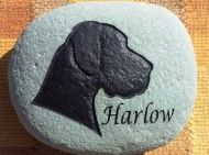 Harlow's memory stone for the garden