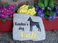 Kaaden's dog Volt