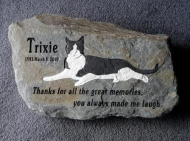 Trixie the cat